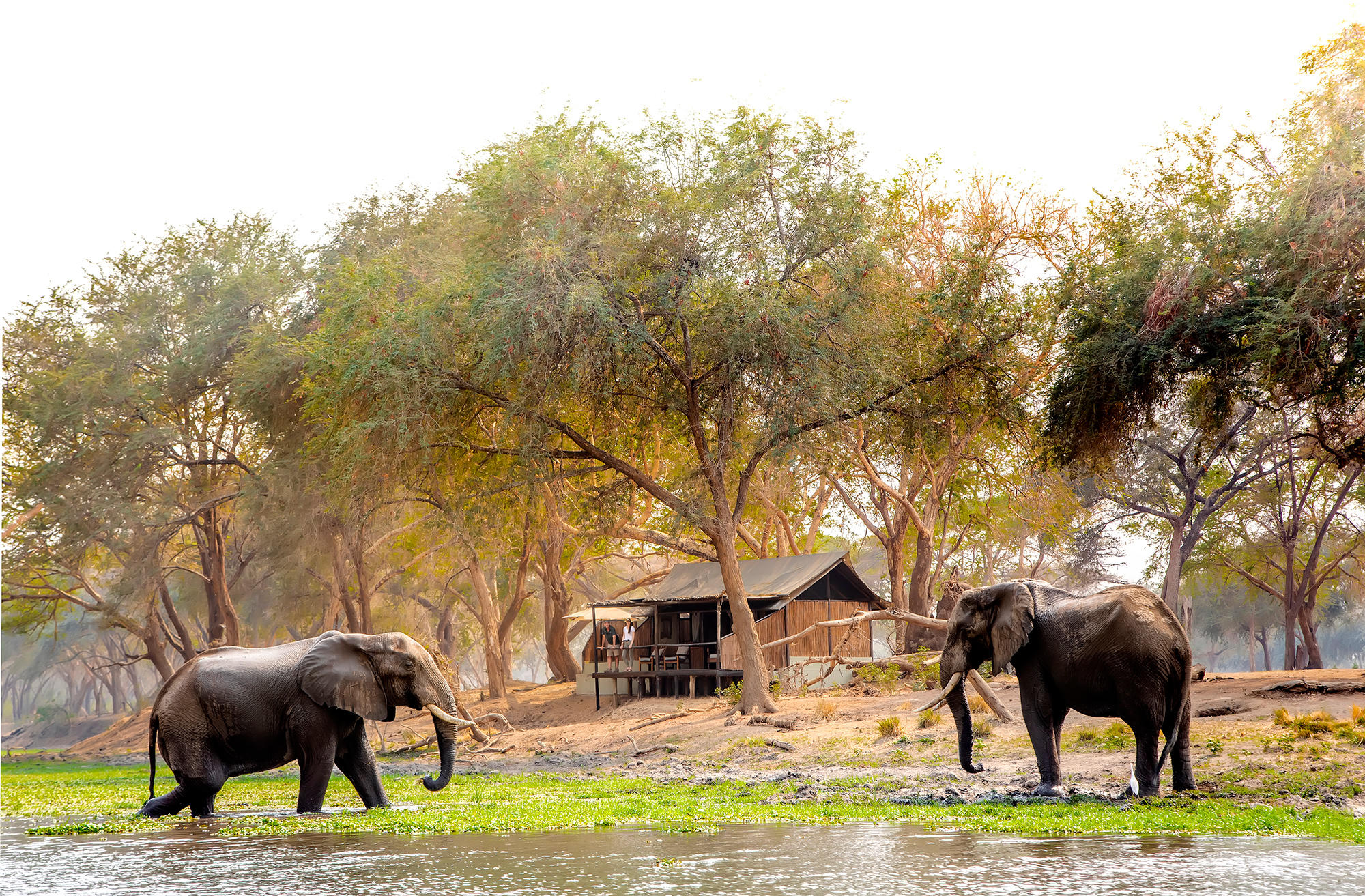 Elephants near tents at Old Mondoro